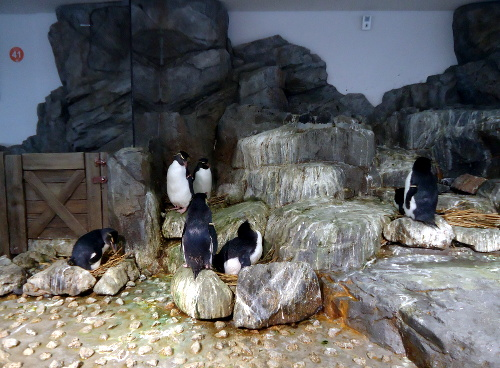 Kiti pingvinai